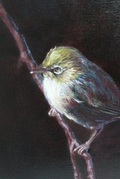 """Silvereye 2"" Oil on Linen $275"
