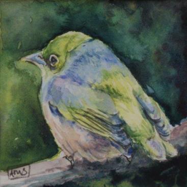 """""""Silvereye IV"""" Watercolour $150"""